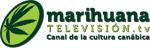 Marihuana TV